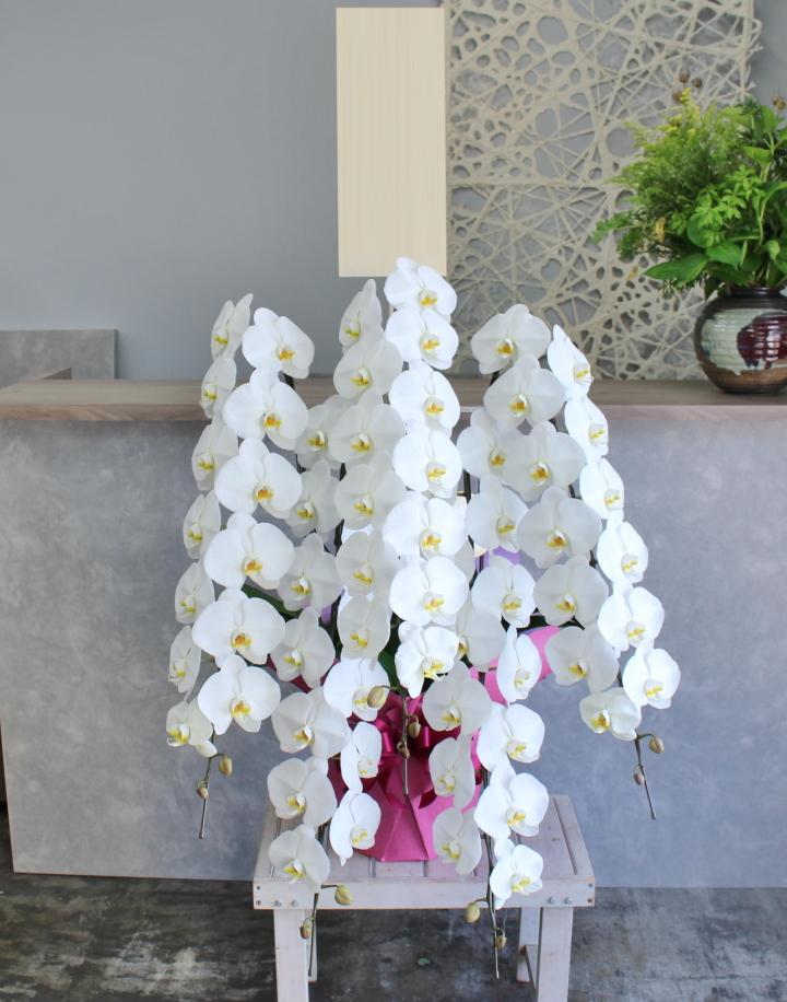 白い胡蝶蘭の鉢花