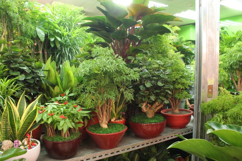 台湾の植物市場