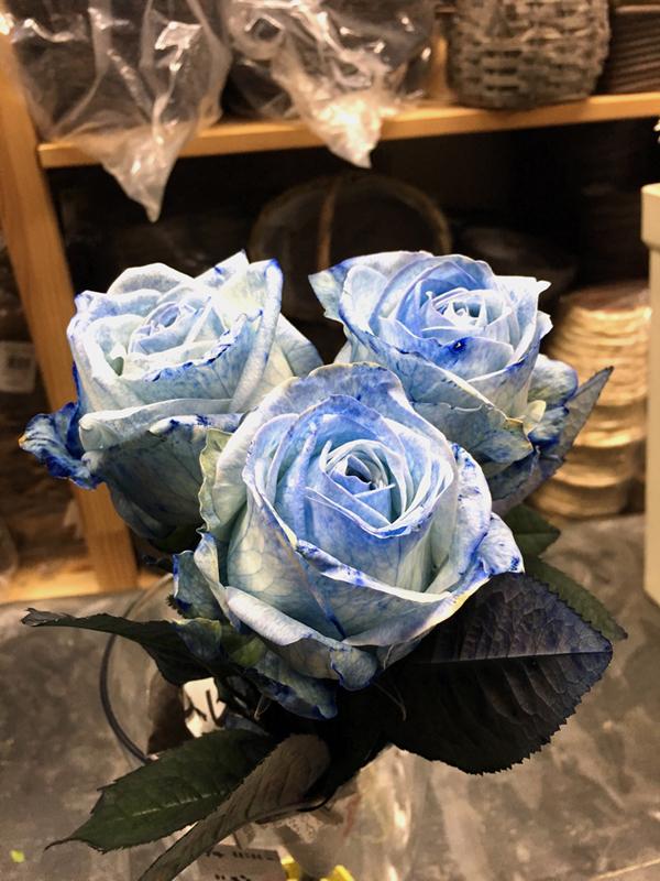 ブルーローズ 青いバラ